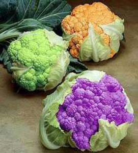 Cauliflower1 (2).jpg
