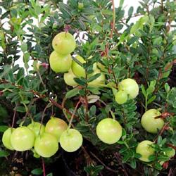 Cranberry (5).jpg