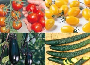 赤松種苗|夏野菜の接木苗セット販売