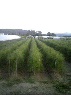 asparagus (12).jpg