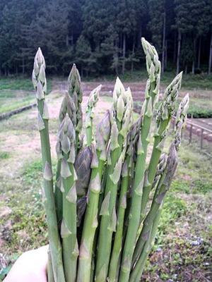 asparagus (13).jpg