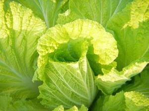 家庭菜園 12月|防寒対策と畑の整頓