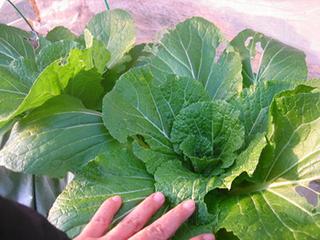家庭菜園 9月