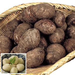 サトイモのプランター栽培|土寄せ分のスペースを確保します